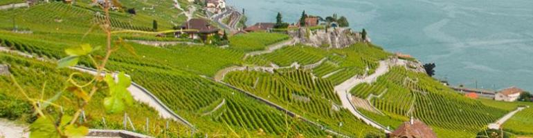 PA_0162_00_ Terrasses de Lavaux - švycarsko - cestování - dovolená- Panda na cestach - panda1709